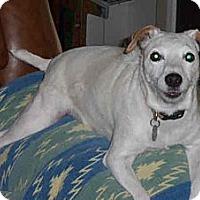 Adopt A Pet :: CHELSEY - Phoenix, AZ