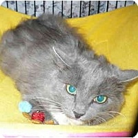 Adopt A Pet :: Scruffy-Muff - Colmar, PA