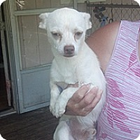 Adopt A Pet :: petey - Crump, TN