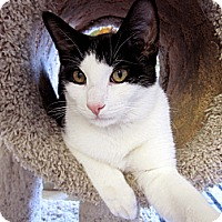 Adopt A Pet :: Paulie - Chicago, IL