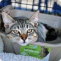 Adopt A Pet :: Twix - Temecula, CA