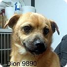 Adopt A Pet :: Dion