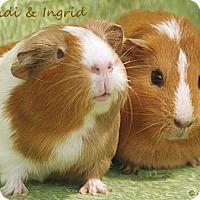 Adopt A Pet :: Heidi & Ingrid - Santa Barbara, CA