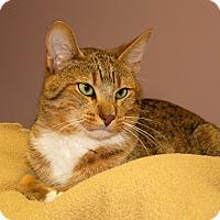 Adopt A Pet :: Dale - Milford, MA