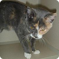 Adopt A Pet :: Margo - Hamburg, NY