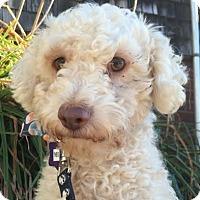 Adopt A Pet :: Theo - San Francisco, CA