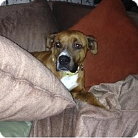 Adopt A Pet :: Kimmy - Denver, CO