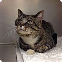 Adopt A Pet :: B-7 Phoebe - Triadelphia, WV