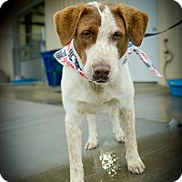 Adopt A Pet :: Vinny - Muldrow, OK