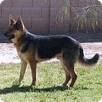 Adopt A Pet :: Cisco - Gilbert, AZ