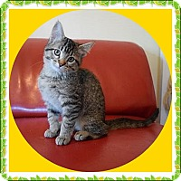 Adopt A Pet :: Merlot - Mt. Prospect, IL