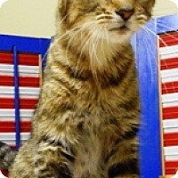 Adopt A Pet :: Hope - Columbus, NE
