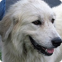 Adopt A Pet :: Belle - Germantown, MD