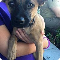 Adopt A Pet :: Bandido - Allen, TX