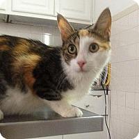 Adopt A Pet :: BASIL - NYC, NY