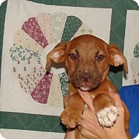 Adopt A Pet :: Mel - Oviedo, FL