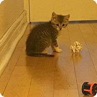 Adopt A Pet :: Georgie - Toronto, ON