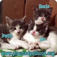 Adopt A Pet :: Blanche - Toledo, OH