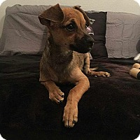 Adopt A Pet :: Noodle - Rancho Cucamonga, CA