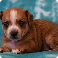 Adopt A Pet :: Peter - Eureka, CA
