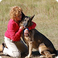German Shepherd Dog Dog for adoption in Preston, Connecticut - Bell