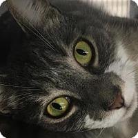 Adopt A Pet :: Sassy-PetValu Voorhees - Voorhees, NJ