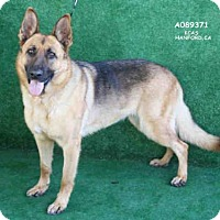 Adopt A Pet :: A089371 - Hanford, CA