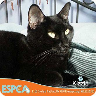 Domestic Shorthair Cat for adoption in Enid, Oklahoma - Kizzie