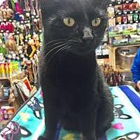 Adopt A Pet :: Betty - McKinney, TX