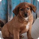 Adopt A Pet :: MJ