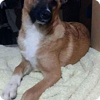 Adopt A Pet :: Madie - El Cajon, CA