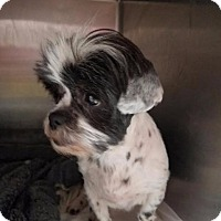 Adopt A Pet :: rosey - Fort Worth, TX