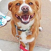 Adopt A Pet :: Kasey - Pending - Detroit, MI