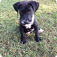Adopt A Pet :: Emerson - Hartsville, TN