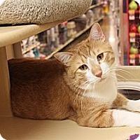 Adopt A Pet :: Jasper & Eva - Smyrna, GA