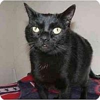 Adopt A Pet :: Pyewacket & Simba - Delmont, PA