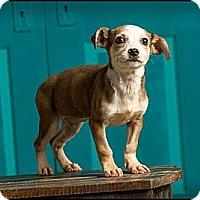 Adopt A Pet :: Millie - Owensboro, KY