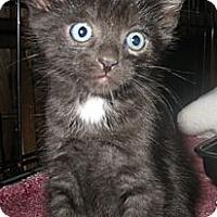 Adopt A Pet :: Dale - Acme, PA
