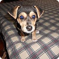 Adopt A Pet :: Candi - San Diego, CA