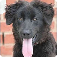 Adopt A Pet :: Larry - kennebunkport, ME