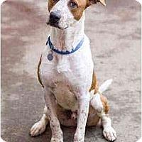 Adopt A Pet :: Tyco - Portland, OR
