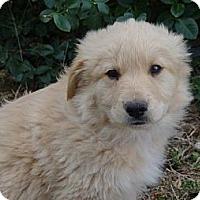 Adopt A Pet :: *Garrett - PENDING - Westport, CT