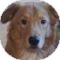 Adopt A Pet :: Copper - Denver, CO