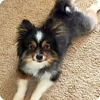 Adopt A Pet :: Jaxson - Green Bay, WI