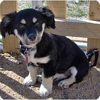 Adopt A Pet :: Piper - Golden Valley, AZ