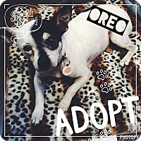 Adopt A Pet :: Oreo - Lake Elsinore, CA