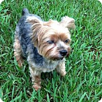 Adopt A Pet :: Sammy - North Port, FL