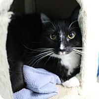 Adopt A Pet :: Elsa - Newport Beach, CA