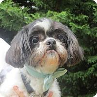 Adopt A Pet :: Hunter - Huddleston, VA
