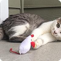 Adopt A Pet :: PIA - Nolensville, TN